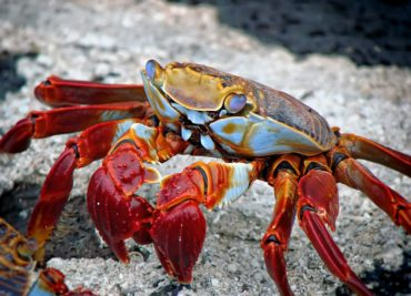 Land Crab Management in Hoi An Biosphere Reserve – Thao et al.